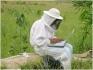 Beekeepers - Captura de Enxames