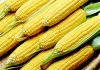 Imperio do Milho e Comercial Alvorada