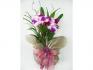 Floricultura em BH Online - Cestas de café da manhã e arranjos de flores.
