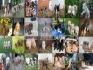 Canil Menorah expecialização em cães