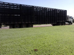 Foto 11 animais no Mato Grosso do Sul - Passos e Barbosa Transportes de Bovinos
