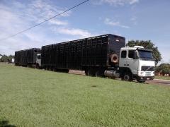 Passos e barbosa transportes de bovinos - foto 9