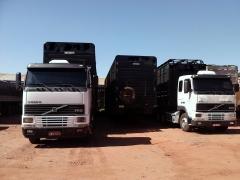 Foto 5 animais no Mato Grosso do Sul - Passos e Barbosa Transportes de Bovinos