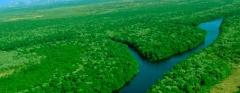 Cuidadando do meio ambiente
