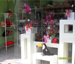 Aphelandra flores presentes e fogos - foto 11