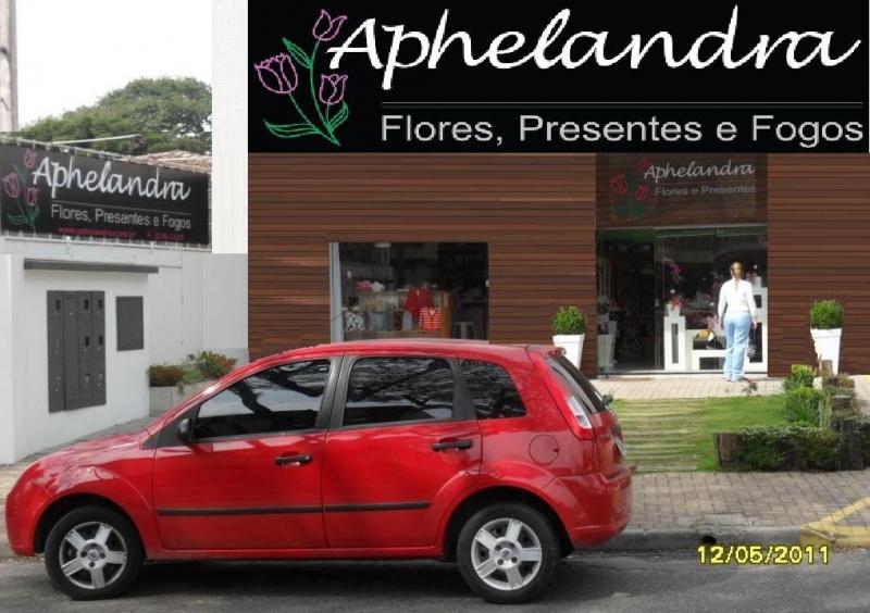 APHELANDRA FLORES PRESENTES E FOGOS
