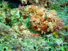 Dive Sul em Bonaire 2011