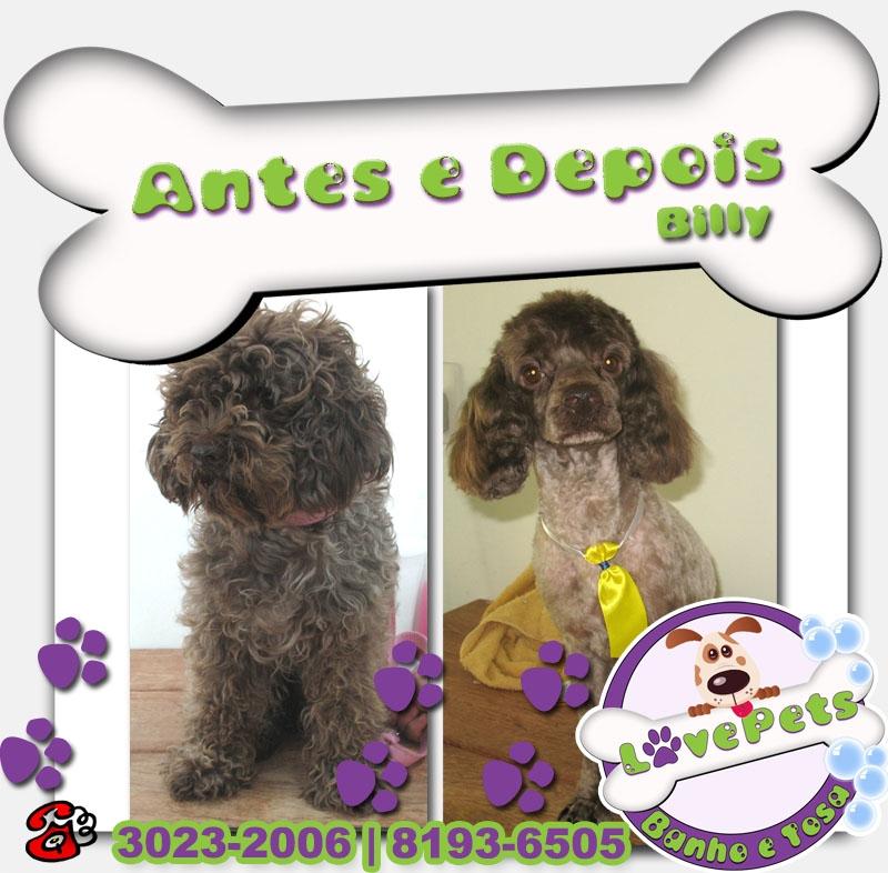 Pet Shop Banho e Tosa Rio Claro