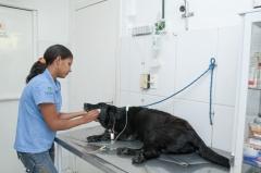 Sala para fluidoterapia