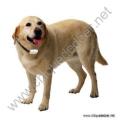 Repelente ultrasônico para cães e gatos