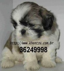 khentzu kennel - Foto 4