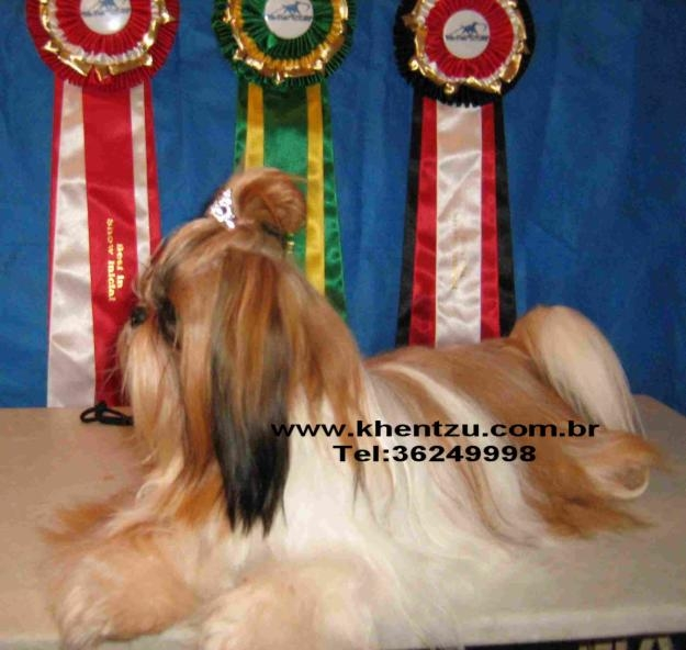 O Terapeuta de Cães - Psicologia Canina & Adestramento de Cães