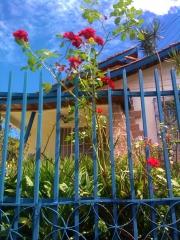 A beleza mora ao lado.