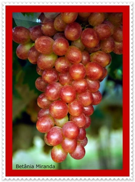 Fotos de Frutas
