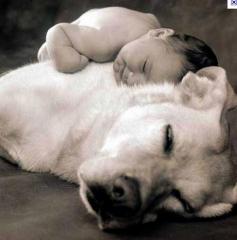 O  carinho que seu cão precisa!