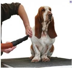 Cuidando do seu cão
