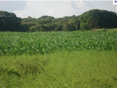 Agropecuária fuquilha s/a