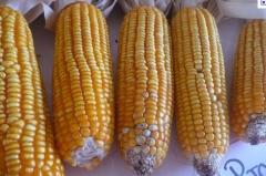 Agropecuária comércio santo afonso ltda