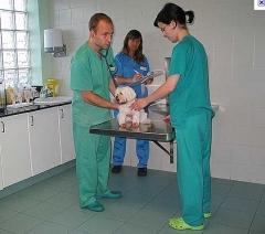 Hospital veterinário sta inês-os melhores profissionais