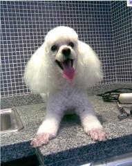 Agro brasil jardinagem e pet shop-o carinho que o seu cão necessita