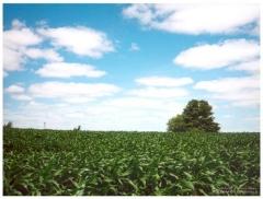 Agricultura - Imgens plantio