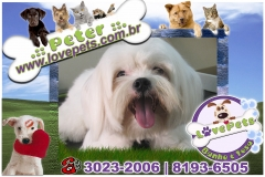 Love pets pet shop banho e tosa rio claro