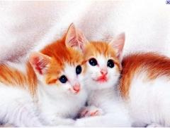 Foto 7 animais - Doce Animal Banho Tosa e Acessórios