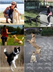 Lançador de Bolinhas para Cães