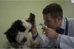 Clinica veterinaria fracao ltda - foto 23