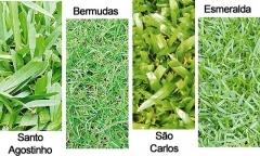 Esmeralda jardinagem - foto 5