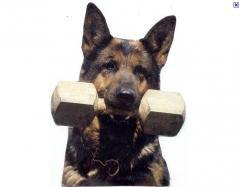 Foto 6 animais no Pernambuco - Rc Adestramento de Cães