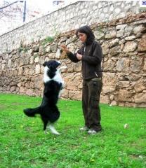 Foto 7 animais no Pernambuco - Rc Adestramento de Cães