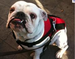 Foto 11 animais no Goiás - Dog Defender Adestramento e Hotel Para Cães