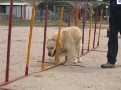 Foto 1 animais no Amapá - Ricardo Nascimento Gomes