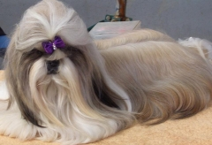 Malucao pet shop - foto 3