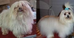 Malucao pet shop - foto 2
