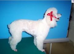 Vivenda lisboa pet shop - foto 22