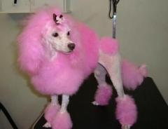 Vivenda lisboa pet shop - foto 9