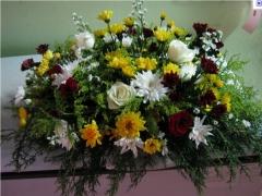 Floricultura caranã  - foto 1