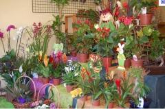 Floricultura caranã  - foto 17