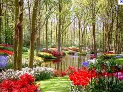 Foto 3 casa e jardim - Art Jardins & Paisagismo