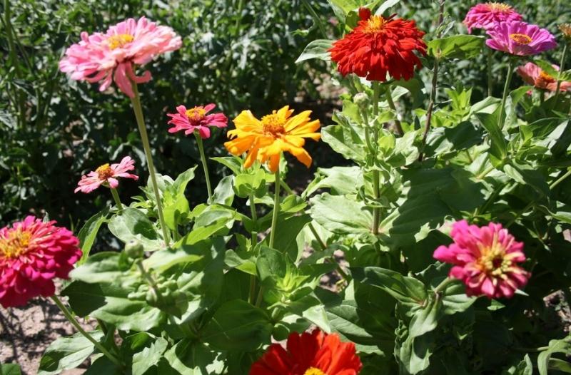 Art Jardins & Paisagismo