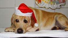 Amigos prontos para o natal !!