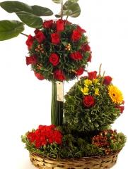 Floricultura santa maria - foto 24