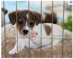 Consultório veterinário carinho animal - foto 2