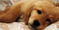 Foto 24 animais no Santa Catarina - Pet Shop Campos