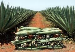 Tecelagem de Sisal da Bahia Ind Com Exportação e Importação - Foto 4