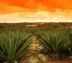 Tecelagem de Sisal da Bahia Ind Com Exportação e Importação - Foto 1
