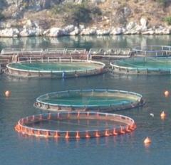 Salinas maricultura - foto 22