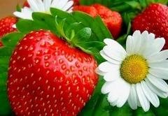 Foto 1 agricultura e pecuária - Brasflower Imp. e Exp. de Flores e Fruta Ltda